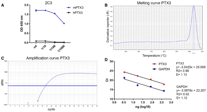 Specificity of <t>ELISA</t> and RT–PCR assays The specificity of the PTX3 ELISA was tested using different dilutions of 2C3 antibody to measure immobilized murine and human PTX3. Purified recombinant murine and human PTX3 were immobilized in <t>96‐well</t> ELISA plates, and then, different dilutions of 2C3 were added. The graph shows dose–response of 2C3 on immobilized murine or human PTX3. Human PTX3 was not detected by 2C3 antibody. Evaluation of the amplification efficiency of real‐time RT–PCR assay designed for PTX3 expression in astrocyte cell cultures. (B, C) Melting curve and amplification plot of PTX3 RT–qPCR assay. (D) Standard curves of PTX3 and GAPDH, used as reference mRNA, obtained using fivefold serial dilutions of the cDNA (420, 84, 16.8, 3.36 ng). The threshold cycle ( C t ) values ( y ‐axis) are plotted against log 10 values of cDNA input amounts ( x ‐axis). The graphs are parallel lines and the calculated efficiencies (E) are, respectively, of 1.13 and 1.12 from a y‐slope of −3.04 and −3.07 and a correlation coefficient ( R 2 ) > 0.9.