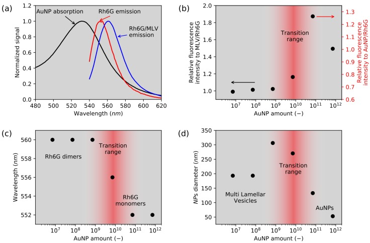 ( a ) normalized Au nanoparticles absorption spectrum (black); rhodamine 6G emission spectra in water solution (red), and MLV (blue); ( b ) relative fluorescence intensity of samples containing Rh6G, MLV with AuNPs measured according to the liposomes suspension with Rh6G; ( c ) variance of maximum Rh6G fluorescence wavelength dependence as a function of the AuNP concentration in the presence of α -PC lipids; ( d ) mean hydrodynamic diameter of samples containing MLV, Rhodamine 6G and AuNPs in a function of nanoparticle amount. At the lowest concentration, only MLVs are visible, but, at higher concentrations, only AuNP are detected by the DLS ( d = 53 nm).
