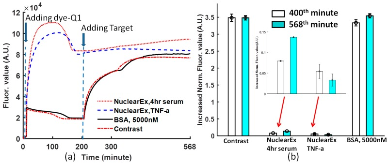 ( a ) The process of the nuclear extract experiment for 10 μg/well <t>TNF-α–stimulated</t> <t>HeLa</t> Nuclear Extract and 10 μg/well 4-h Serum HeLa Nuclear Extract. The dye-quencher was added to the protein solution at time = 0, and the target DNA was added at time = 197th minute; ( b ) comparison of increased normalized fluorescence values obtained at the 400th and 568th minutes from Figure 4 a, after adding target DNA for 10 μg/well TNF-α–stimulated HeLa Nuclear Extract and 10 μg/well 4-h Serum HeLa Nuclear Extract. The data from Figure 4 a are normalized following Equation (1).