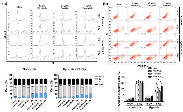 Effects of fucoidan-coated manganese dioxide nanoparticles (Fuco-MnO 2 -NPs) on ionizing radiation (IR) -induced apoptotic cell death in BxPC-3 cells. ( a ) Flow cytometry evaluation of cell cycle progression at 72 h post-irradiation. BxPC-3 cells were pretreated with 0.5 μg/mL of fucoidan and 1 μg/mL of PAH-MnO 2 -NPs and Fuco-MnO 2 -NPs for 3 h in a hypoxic (1% oxygen) or normoxic condition and then exposed to IR. 6 Gy of X-ray was applied because 4 Gy was not strong enough to induce apoptosis in BxPC-3 cells. After 72 h, cells were fixed and stained with PI. Histograms show the representative DNA content stained with PI. Stacked bar graphs show the relative percentage of cells at different cell cycle phases ( n = 3). ( b ) Apoptosis was assessed by percentage of Annexin-V-positive cells using flow cytometry. PAH-MnO 2 -NPs and Fuco-MnO 2 -NPs reversed suppression of IR-induced apoptosis by hypoxia ( n = 3). Data are presented as mean ± SD; * p
