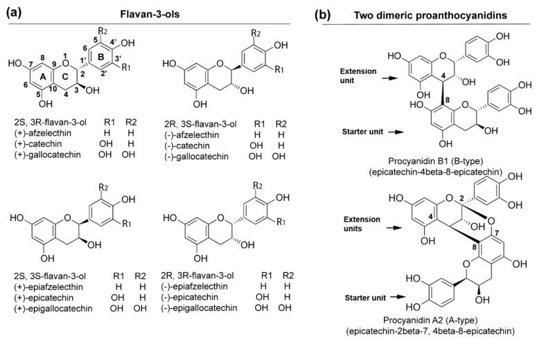 Schemes of <t>flavan-3-ols</t> (monomers) and dimeric proanthocyanidins: ( a ) four types of stereo configurations of different monomeric flavan-3-ols, such as (+)-catechin, (−)-epicatechin, (−)-epigallocatechin, and (−)-epicatechin; ( b ) two examples of dimeric proanthocyanidins, procyanidin A2 (A-type) and procyanidin B1 (B-type).