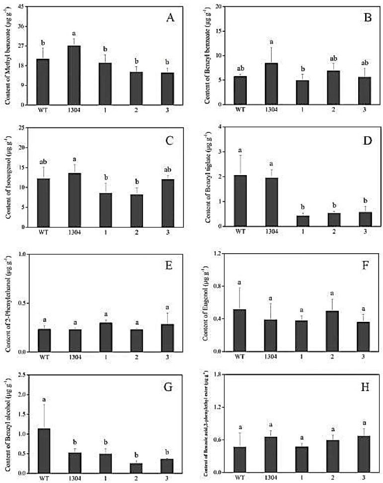 Analysis of the main volatile components in flower of RrPPDC1 transgenic and control Petunia . ( A ) methyl benzoate; ( B ) benzyl benzoate; ( C ) isoeugenol; ( D ) benzyl tiglate; ( E ) 2-phenylethanol; ( F ) eugenol; ( G ) benzyl alcohol; ( H ) benzoic acid, 2-phenylethyl ester; (WT) wild type; (1304) pCAMBIA1304 transgenic plants; (1–3) RrPPDC1 transgenic plants (±SE, n = 3).