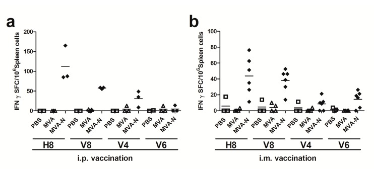 Screening for H2-d restricted T cell epitopes in MERS-CoV N protein using matrix peptide pools; ( a – b ) groups of BALB/c mice ( n = 2 to 6) were vaccinated twice (21-day interval) by i.p. ( a ) or i.m. ( b ) application with 10 8 plaque-forming-units (PFU) of recombinant MVA-MERS-N (MVA-N). Mice inoculated with non-recombinant MVA (MVA) or phosphate-buffered saline (PBS) were used as controls. Splenocytes were restimulated in vitro with pools of overlapping peptides corresponding to MERS-CoV N protein. IFN-γ spot-forming CD8+ T cells (IFN-γ SFC) were measured by ELISPOT. The lines represent means.