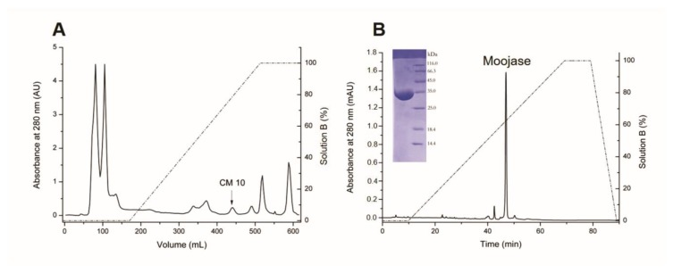 Isolation of Moojase from Bothrops moojeni snake venom. ( A ) Chromatographic profile of B. moojeni crude venom (200 mg) on a CM-sepharose column, equilibrated and eluted with 50 mM ammonium bicarbonate buffer, pH 7.8, followed by a linear gradient of up to 500 mM (solution B). Fractions were collected at a flow rate of 20 mL/h and at room temperature. ( B ) Chromatographic profile of Moojase (2.2 mg) on a C18 reversed-phase column equilibrated and eluted with 0.1% trifluoroacetic acid (TFA), and 70% acetonitrile and 0.1% TFA (solution B). Protein elution was achieved at flow rate of 1 mL/min with a linear concentration gradient of solution B. Insert, 12% SDS-PAGE of the purified Moojase under denaturing and reducing conditions.