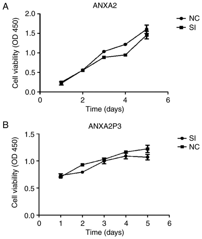 Cell Counting kit-8 assay was used to determine cell viability. Cell viability of (A) si-ANXA2- and (B) si-ANXA2P3-transfected cells was detected. ANXA2, Annexin A2; ANXA2P3, ANXA2 pseudogene 3; NC, negative control; OD, optical density; SI/siRNA, small interfering RNA.