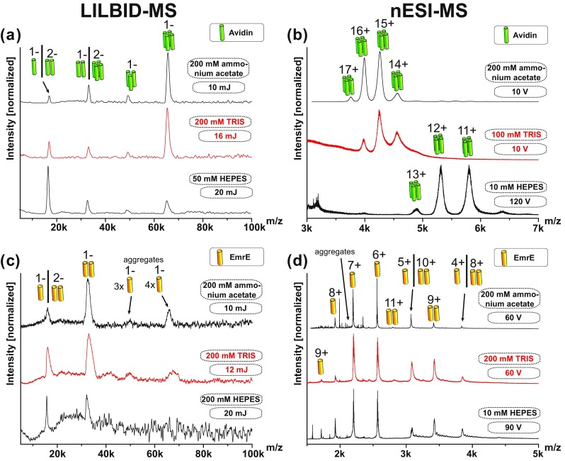 Different buffer tolerances of LILBID-MS and nESI-MS using Avidin and EmrE. Avidin tetramer and EmrE dimer in buffers containing up to 200 mM ammonium acetate were detectable in LILBID-MS ( a , c ) and nESI ( b , d ). <t>TRIS</t> ( a , b ) and <t>HEPES</t> buffer (bottom a – d ) are worse to handle for both instruments, requiring increased laser power and CID voltage with increasing buffer concentrations as indicated. All EmrE buffers contain additionally 5× CMC DDM