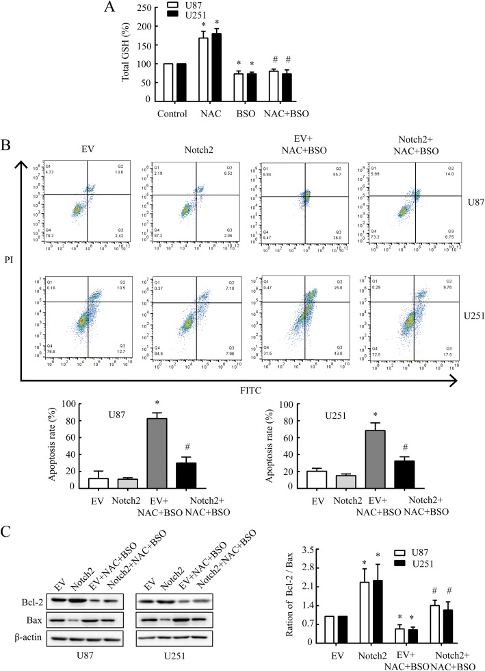 NAC induces apoptosis in GBM cells via targeting Notch2 signaling. a Total cellular GSH was measured in U87 and U251 cells under pre-treatment of BSO (2 mM, 12 h), followed by NAC (20 mM, 24 h). * P