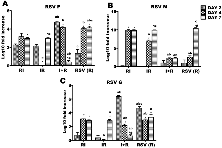 Respiratory syncytial virus (RSV) F, G and M genes expressions across the experimental groups. Six groups of BALB/c mice were intranasally treated with 32 μl of normal saline (uninfected), RSV A2 (RSV(R)), Pr/H3N2 (IAV (I)) or co-treated simultaneously (I + R) or one after the other at 24 hours interval (IR and RI). On days 2, 4 and 7, mRNA was extracted from lungs (n = 5) for real time PCR analysis of RSV genes. (A) mRNA expression level of F gene (B) mRNA expression level of M (C) mRNA expression level of G. RSV F and G expression were markedly downregulated in I + R group by day 7 while RSV M expression was very low throughout the infection period in I + R group. CT values were normalized with GADPH, mRNA expression level was calculated using 2 −ΔΔCT method and presented as Log10 fold increase relative to uninfected controls. mRNA expressions for RSV F, M and G were not detected in IAV (single virus) infected mice. * vs Day 2 and # vs Day 4 for within group comparison while a vs RI, b vs IR and c vs I + R for comparing between groups of the same day (p