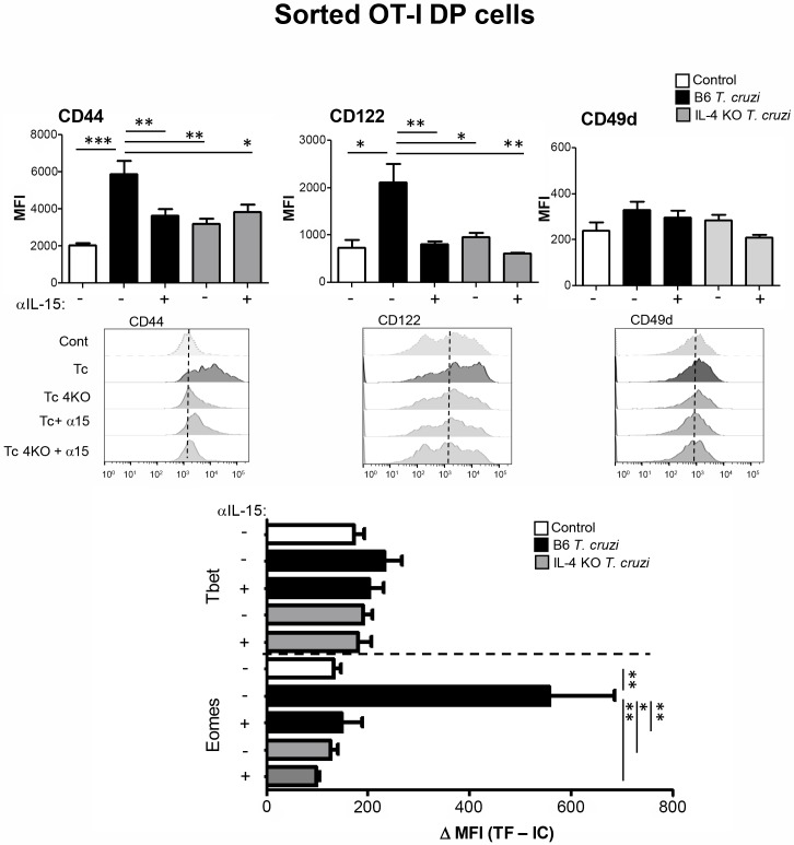 Blockage of IL-4 and IL-15 inhibits the induction of the innate phenotype in DP thymocytes. A bulk population of CD45.2 + thymocytes either from WT control, WT T . cruzi- infected (Tulahuen) or IL-4KO T . cruzi- infected (Tulahuen) mice were obtained at day 14 post-infection and cultured for 2h at 37°C in the presence of PMA/ionomycin. Cells were washed twice and co-cultured with sorted DP cells from OT-I (Vβ5 + OVA-tetramer + ) control mice at a 1:1 ratio in the presence or absence of a neutralizing anti-IL-15 Ab. After 48h, thymocytes were obtained and CD44, CD122, CD49d, Eomes and Tbet expression were analyzed by Flow cytometry only in DP CD8 OVA-specific OT-I thymocytes. Eomes or Tbet were measured by intranuclear staining using Flow cytometry analysis and were expressed as the difference of the mean fluorescence intensity (MFI) of Eomes or Tbet vs the MFI of the correspondent isotype control (IC). Histograms are representative of two independent experiments with 3–6 mice/experiment. The statistical test applied was a One-way ANOVA. T . cruzi vs the rest of the groups, *p