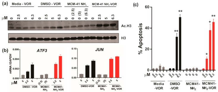 HDAC inhibition and anti-tumour activity of vorinostat dissolved in media, DMSO or encapsulated within nanoparticles. ( a ) Western blot of acetylated histone H3 and total histone H3 following treatment of HCT116 CRC cells with escalating doses of vorinostat dissolved in media, DMSO, or encapsulated within nanoparticles (MCM-41-NH 2 -VOR) for 1 h. Cells treated with corresponding amounts of empty nanoparticles (MCM-41-NH 2 ) served as controls. ( b ) mRNA expression of ATF3 and JUN determined by qRT-PCR following 24 h treatment with escalating doses of vorinostat dissolved in DMSO or encapsulated within nanoparticles (MCM-41-NH 2 -VOR). ( c ) Apoptosis induction of HCT116 cells following 24 h treatment with escalating doses of vorinostat dissolved in media, DMSO, or encapsulated within nanoparticles (MCM-41-NH 2 -VOR) was determined by propidium-iodide staining and FACS analysis. Cells treated with corresponding amounts of empty nanoparticles (MCM-41-NH 2 ) served as controls. Values shown are mean ± SEM of a representative experiment performed in triplicate. *, p