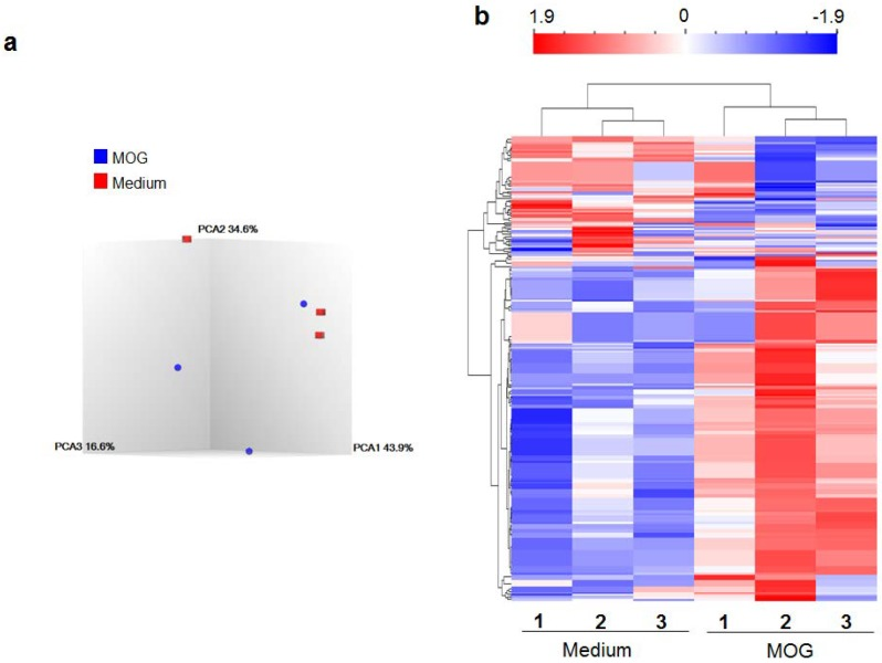 The differential expression of miRNAs in response to the disease-related antigen (MOG 35–55 ). Splenocytes (SPCs) of MOG 35–55 -induced experimental autoimmune encephalomyelitis (MOG-EAE) mice were restimulated for 24 h with MOG 35–55 (25 μg/mL) or in medium alone without MOG 35–55 (Medium control). The total RNA isolated from these SPCs was then used for miRNA expression using GeneChip TM miRNA 4.0 Array (Affymetrix, Santa Clara, CA, USA). The data was analyzed statistically as follows, ( a ) three-dimensional scatter plot of principal component analysis (PCA) displaying the relationship between the test and control groups and ( b ) heatmap and hierarchical clustering of miRNA expression profiles of MOG 35–55 -restimulated splenocytes of EAE mice and that of SPCs in medium alone (baseline). Red color indicates higher expression, whereas blue color indicates reduced expression of miRNAs. ( n = 3 each for MOG 35–55 restimulation and medium control).