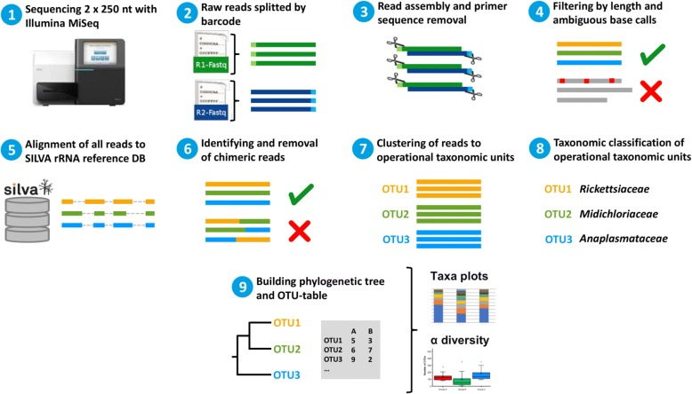 Schematic overview of microbiome bioinformatic analysis workflow. The hypervariable V4 region of 16S rDNA from tick samples was sequenced and split by barcode with Illumina MiSeq. Resulting paired-end reads were joined and the primer region was removed. Reads were filtered by amplicon length and aligned to SILVA as the reference database. After removal of chimeras, reads were clustered into operational taxonomic units (OTU) and taxonomically classified. Finally, an OTU-table was created and results were visualized