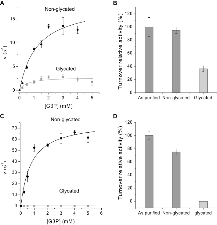 Steady-state enzyme kinetics of Arabidopsis glyceraldehyde-3-phosphate dehydrogenase (GAPC1) and triosephosphate isomerase (TPI). (A) Plots of turnover rate constants of TPI versus dl -glyceraldehyde-3-phosphate (G3P) substrate concentration. Non-glycated TPI shown in black and glycated TPI after 3 weeks in grey, with the data points fitted to the Michaelis–Menten equation to yield a K m value and turnover rate ( k cat ). (B) The percentage relative turnover activity of purified TPI, non-glycated and glycated after 3 weeks. (C) Plots of turnover rate constants of GAPC1 versus G3P substrate concentration in 10 mM NaH 2 PO 4 /Na 2 HPO 4 , pH 8.5, 100 mM NaCl. Non-glycated GAPC1 shown in black and glycated GAPC1 after 3 weeks in grey, with the data points fitted to the Michaelis–Menten equation to yield a K m value and turnover rate ( k cat ). (D) The percentage relative turnover activity of purified GAPC1, non-glycated and glycated after 3 weeks. K m , k cat , and k cat / K m values are given in Table 6 . All experiments were performed at 25 °C using a Hewlett-Packard <t>8453</t> diode-array spectrophotometer.