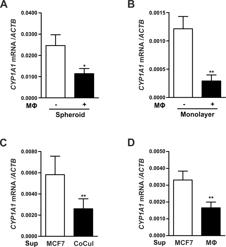 Macrophages suppress CYP1A1 expression in breast tumor cells. (A) MCF7 cells grown as tumor spheroids were cultured for 48 hours in the absence or presence of CD14 + cells. (B) Monolayer MCF7 cells were co-cultured with MΦs. (C-D) Monolayer MCF7 cells were incubated with supernatants of MCF7 cells (Sup MCF7), (C) supernatants of MCF7-MΦ co-cultures (Sup CoCul), or (D) supernatants of MΦs alone (Sup MФ) for 48 hours. CYP1A1 mRNA expression was determined by RT-qPCR analysis and normalized to ACTB . Data are presented as means ± SEM (n ≥ 3, * p