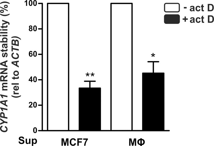 CYP1A1 mRNA stability. MCF7 cells were incubated with supernatants of MCF7 cells or MΦs for 48 hours. De novo mRNA synthesis was blocked by addition of the transcription inhibitor actinomycin D (act D, 4 μg/ml) for the last 2 hours. CYP1A1 mRNA expression was determined by RT-qPCR analysis and normalized to ACTB . mRNA stability is given as mean expression ± SEM after 2 h act D relative to cells incubated with the respective supernatants without addition of act D (n = 3, * p