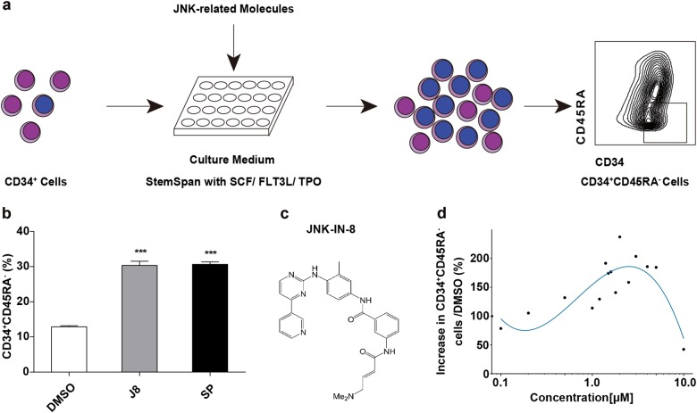 JNK-IN-8 promotes HSPC expansion in vitro. a Experimental schematic for the evaluation of JNK inhibitors on HSC expansion. CD34 + cells were cultured with StemSpan SFEM II medium supplemented with SCF, TPO, FLT3L in the presence of JNK-related molecules for 7 days, then the total cell expansion and CD34 + CD45RA - cell frequency was determined. b Frequency of CD34 + CD45RA - cell subsets in 7-day cultures of CD34 + cells supplemented with two representative JNK inhibitors including JNK-IN-8 (2 μM) and SP600125 (5 μM) ( n = 3 experiments). c Chemical structure for JNK-IN-8 (hereafter called J8). d The increasing fold of CD34 + CD45RA - subset frequency compared to DMSO after 10-day culture of CD34 + cells with different concentration of J8 (This data was drawn by R). See also to Supplementary Table S1 . All data shown as mean values ± SD. Statistical significance was assessed using unpaired t test, where *** p