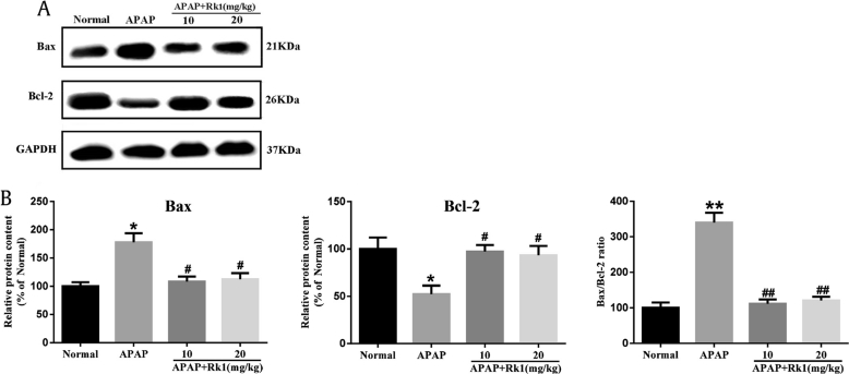 Protein expression of Bax and Bcl-2. (A) Effects of Rk1 on the protein expression of Bax and Bcl-2. (B) Results quantified from Bax and Bcl-2 band intensities. The protein expression was examined using western blotting analysis in liver tissues. All data are expressed as the mean ± standard deviation, n = 8. * p
