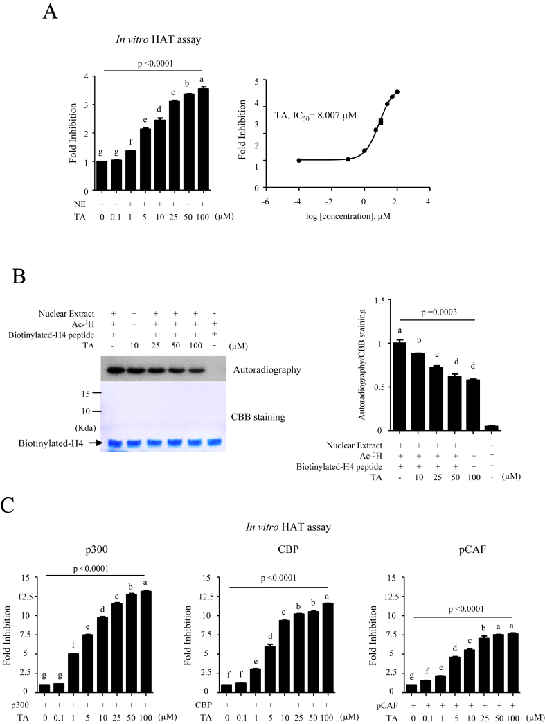 Inhibitory effects of TA on <t>HAT</t> activity. (A) A colorimetric assay was performed to measure HAT activity in the presence of TA at the indicated concentrations. The results are presented as percentages relative to the control sample, which was incubated without TA (left panel). The IC 50 value of TA inhibition of HAT activity was calculated using Prism software (right panel). (B) An in vitro HAT assay using autoradiography was performed to evaluate the effect of the anti-HAT activity of TA on the acetylation of a synthetic H4 peptide by a <t>HeLa</t> NE. The arrow indicates histone H4 (left panel). The autoradiography was quantified using Image J software (right panel). The values presented are the means ± SD of two independent experiments. Means with different superscript letters are significantly different, p