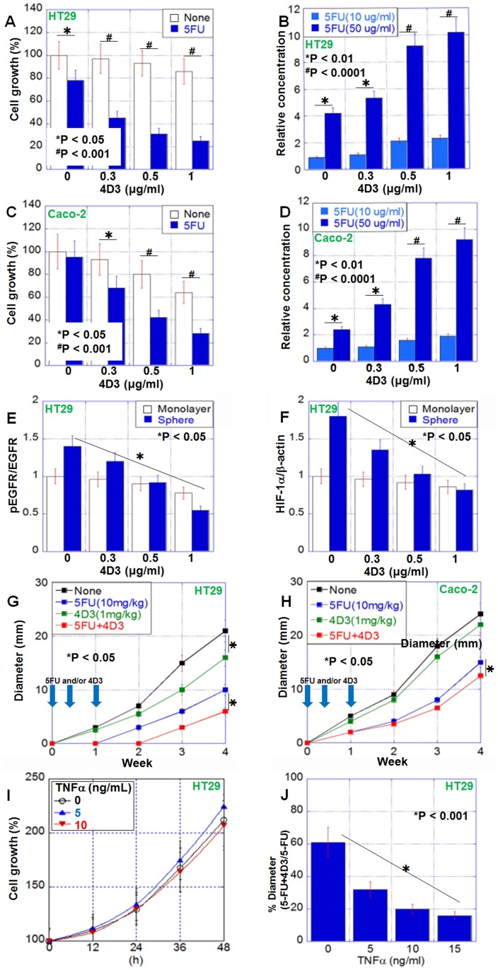 Antitumoral effect of 4D3 anti-CLDN4 antibody in human CRC cells ( A , C ) 4D3 enhances the growth inhibitory effects of 5-FU in HT29 cells (A) and Caco-2 cells (C). ( B , D ) 4D3 increases the effective intracellular concentration of 5-FU in HT29 cells (B) and Caco-2 cells (D). ( E , F ) Effect of 4D3 on EGFR phosphorylation (E) and HIF-1α expression (F) in HT29 cells. ( G , H ) Effect of treatment with 5-FU and/or 4D3 without TNFα (G) or with TNFα pretreatment (10 ng/mL, for 2 days) (H). n = 5 per group. ( I ) Effect of TNFα on growth of HT29 cells. Graph legend; TNFα (ng/mL). ( J ) Effect of TNFα on the growth inhibition induced by concurrent treatment with 5-FU and 4D3. Error bars, SD.