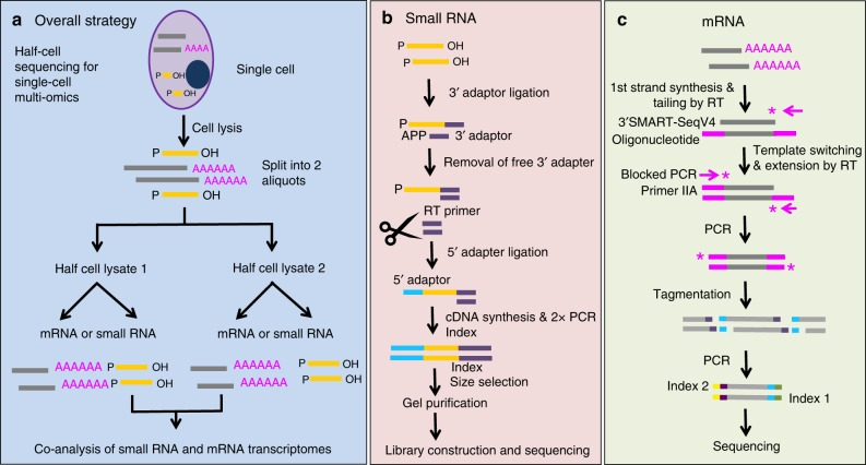 Experimental workflow. a Overall strategy for profiling miRNA and mRNA from the same single cells using half-cell genomics. It involves cell lysis, half-cell split, followed by small RNA large RNA library preparation. b For miRNA library preparation, a pre-adenylated (APP) 3′ adaptor was used to ligate to the 3′ end of miRNA molecules, followed by digestion of unreacted 3′ adaptor, ligation with 5′ adaptor, RT and PCR amplification. c For mRNA library preparation, first-strand cDNA synthesis was primed by the 3′ SMART-Seq CDS Primer IIA. Template switching at the 5′ end of transcript was performed using the SMART-Seq v4 oligonucleotides. After PCR amplification, cDNA was fragmented using Illumina's Tagmentation process