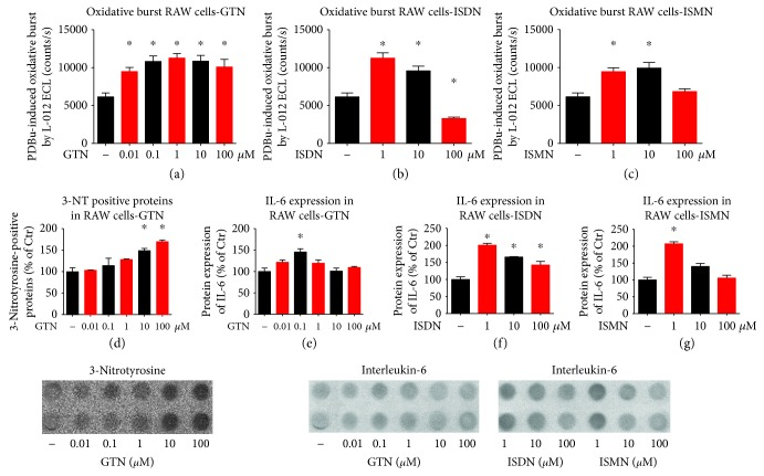 Characterization of in vitro effects of organic nitrates on oxidative burst signals and inflammatory activity of cultured RAW 264.7 cell macrophages. The organic nitrates GTN, ISDN, and ISMN increased the ROS formation by cultured macrophages in response to phorbol ester (PDBu) as measured by L-012 ECL (a–c) and 3-nitrotyrosine immunostaining (d). Likewise, GTN, ISDN, and ISMN increased the release of the cytokine IL-6 by cultured macrophages as measured by immunoblotting (e–g). The data are mean ± SEM from at least eight different cell culture wells. ∗ p