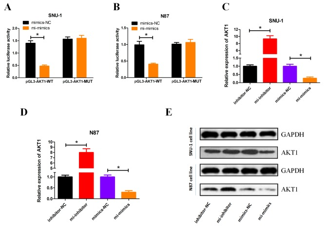 miRNA-490-3p directly targets AKT1 expression. Following miRNA-490-3p overexpression luciferase activity was measured in (A) SNU-1 and (B) N87 cells. The mRNA expression level of AKT1 was determined by reverse transcription-quantitative polymerase chain reaction in (C) SNU-1 and (D) N87 cells following transient transfection with miRNA-490-3p mimic, inhibitor and negative control. (E) The protein expression level of AKT1 was determined by western blot analysis. *P