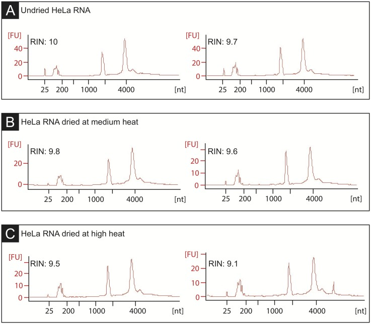 Dehydrated RNA demonstrates preserved integrity. Bioanalyzer traces and RNA Integrity Numbers (RINs) of biological replicates of HeLa RNA. (A) Before being dried in a vacuum evaporator. (B) After being dried for 30 minutes at 40°C. (C) After being dried for 25 minutes at 65°C. RINs indicate that RNA quality is not compromised during the dehydration process.
