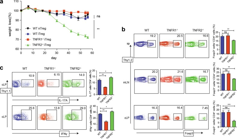 The effect of TNFR1 and TNFR2 on iTreg stability and function in vivo. iTreg were induced from three strains (Thy1.2 + ) as above protocols. 3 days later, these cells (0.6 × 10 6 ) were i.v. injected into Rag1 −/− mice that has received WT Thy1.1 + naive CD4 + T cells (0.6 × 10 6 ) through i.p. injection on the same day. a Weights of the recipient mice were monitored after the cell transfer. b 56 days after the transfer, spleens, mLNs, and cLP were harvested and the proportions of Foxp3 + T cells gated on Thy1.2 + cells were determined. c The proportions of IL-17A + or IFN-γ + T cells gated on Thy1.1 + cells in cLP were determined. * P ≤ 0.05; ** P ≤ 0.01; *** P ≤ 0.001, error bars denote SD. Representative data is from six similar independent experiments
