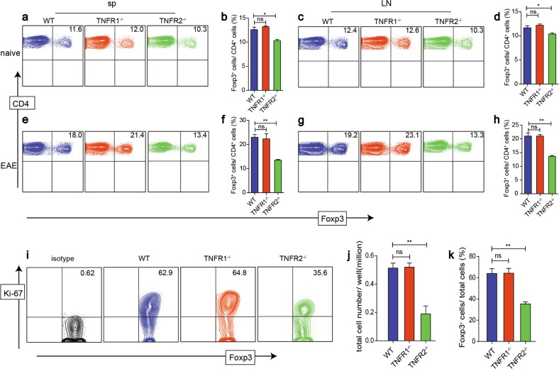 TNFR2 is a critical signaling for Treg expansion following EAE induction and in vitro. a–d We detected the proportions of Treg in spleen and LNs from naive WT, TNFR1 −/− , and TNFR2 −/− mice. e–h 30 days after immunized with MOG, the proportion of Treg in spleen and LNs from the three groups were detected. i–k Treg isolated from LNs of WT, TNFR1 −/− , and TNFR2 −/− mice were expanded in vitro. Ki-67 was detected after 3 day culture. * P ≤ 0.05; ** P ≤ 0.01, error bars denote SD. Representative data is from six independent experiments