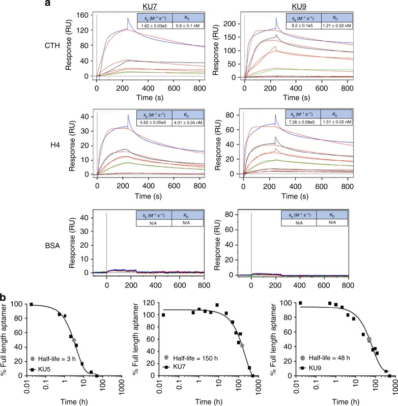 Binding characterization and stability measurements of individual histone RNA aptamer sequences. a Binding kinetic rate constants ( k a and K D ) determined for aptamers KU7 (left panels) and KU9 (right panels) binding to CTH (top panels), H4 (middle panels) and BSA (bottom panels). Aptamers concentrations tested: 100 nM (blue), 50 nM (black), 25 nM (red), 12.5 nM (green), 10 nM (magenta). b Serum stability measurements for aptamers KU7 and KU9 (5 μM) in 50% human serum. T 1/2 KU7 = 150 h. T 1/2 KU9 = 48 h