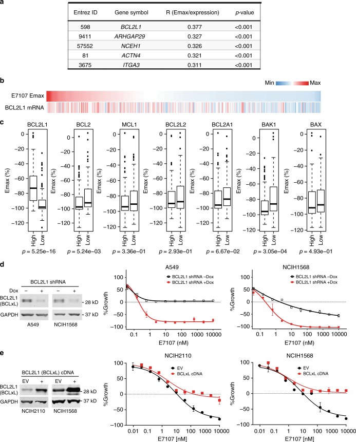 """Cell line panel screen of drug sensitivity identifies BCL2L1 expression as a marker of insensitivity to E7107. a Top five genes whose mRNA expression positively correlated with maximum effect of cell killing (Emax) of E7107 profiled in 478 cancer cell lines. Pearson's correlation coefficient R and p values were calculated using R package Hmisc 4.1-0. Lower Emax value indicates more robust cell killing activity. b Heatmap demonstrating the positive correlation between Emax of E7107 and BCL2L1 mRNA expression in 478 cancer cell lines. The heatmap was sorted by Emax of E7107 in cancer cell lines from high (less sensitive) to low (more sensitive). c Box plots showing the distribution of Emax (%) of E7107 in two groups of profiled cell lines defined by expression levels of each BCL2 family genes. For each BCL2 family genes, cell lines with expression level higher than the third quartile are classified into """"high"""" and cell lines with expression level lower than the first quartile are classified into """"low."""" p Values were calculated using Student's t test. d Growth-inhibitory activity of E7107 in lung cancer cell lines A549 and NCIH1568 upon doxycycline-induced <t>shRNA</t> knockdown of BCL2L1 . Left, Western blot analysis of BCLxL(encoded by BCL2L1 ) knockdown; Right, Growth curves of two cell lines measured by CellTiter-Glo. Data represent means ± SD of biological triplicates. e Growth-inhibitory activity of E7107 in lung cancer cell lines NCIH2110 and NCIH1568 upon stable <t>cDNA</t> expression of BCL2L1 (BCLxL). Left, Western blot analysis of BCLxL(encoded by BCL2L1 ) overexpression; Right, Growth curves of two cell lines measured by CellTiter-Glo. Data represent means ± SD of biological triplicates"""