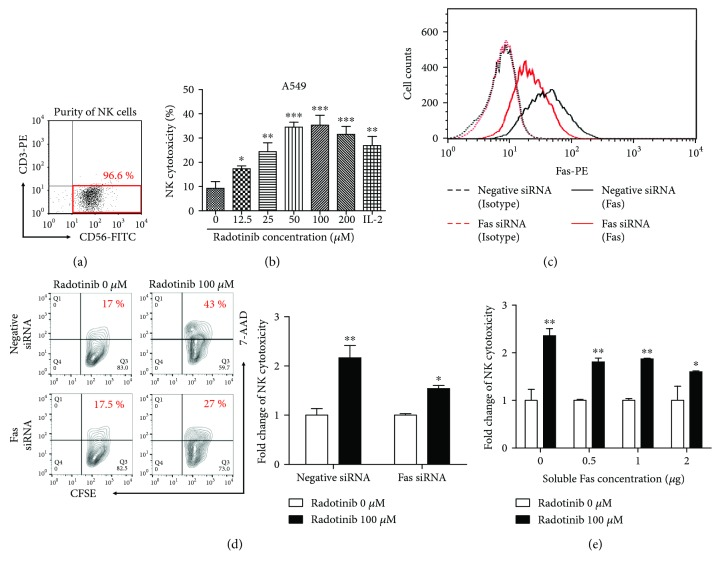 Radotinib enhances cytolytic activity of NK cells against Fas-expressing A549 cells. (a) Primary NK cells were isolated from healthy donors to perform NK cell cytotoxicity assay. The purity of CD3 − CD56 + NK cells was 96.6%. (b) To determine the effect of radotinib on the cytolytic activity of NK cells against A549 cells, the cells were treated with various concentrations of radotinib (0, 12.5, 25, 50, 100, and 200 μ M) for 48 h and the cytotoxicity assay was performed (E : T ratio = 5 : 1). (c) To determine if the effect of radotinib on NK cytotoxicity was mediated by the Fas receptor, Fas expression was transiently downregulated by Fas siRNA transfection into A549 cells. At approximately 70% confluency, A549 cells were incubated with 50 pmole Fas-specific siRNA or negative control siRNA using Lipofectamine RNAiMAX. Surface expression of Fas on A549 cells was determined by staining with PE-conjugated Fas antibody (solid line). PE-conjugated mouse IgG antibody was used as an isotype control (dotted line). (d) The effect of radotinib on NK cytolytic activity against Fas siRNA-transfected A549 cells was determined by cytotoxicity assay. Radotinib-treated NK cells were used as effector cells, and Fas siRNA-transfected A549 cells or control cells were used as target cells (E : T ratio = 2 : 1). All values were normalized relative to the control (radotinib 0 μ M). The relative level was set to 1 for the control. (e) To further confirm the involvement of Fas-Fas ligand interaction in the radotinib-enhanced NK cytotoxicity, recombinant human soluble Fas was used to block Fas ligand on NK cells. Various concentrations of soluble Fas were preincubated with resting NK cells or radotinib-treated NK cells for 1 h, and then cytotoxicity assays were performed (E : T ratio = 2 : 1). All values were normalized relative to the control (radotinib 0 μ M). The relative level was set to 1 for the control. Data are reported as mean ± SD. All values were analyzed by unpaired Student's t 