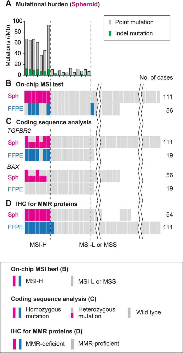 Schematic summary of the analysis results using colorectal cancer spheroids compared with those using FFPE tumors ( A ) Mutational burden estimated by exonic sequencing of spheroid DNA for 409 cancer related genes. ( B ) MSI status judged by on-chip electrophoresis of the Bethesda panel markers. ( C ) Mutations in the mononucleotide repeats in coding regions of TGFBR2 and BAX determined using spheroid and FFPE tumor DNA. ( D ) IHC results of the cultured spheroids of tumor-initiating cells and FFPE primary tumors. Color keys are shown in boxes. See text for details.