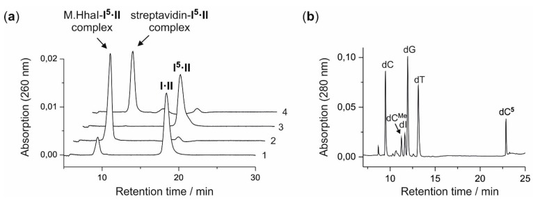 Biotin labeling of duplex ODN I·II with aziridine cofactor 5 and M.HhaI. ( a ) Anion-exchange <t>HPLC</t> analysis of the coupling reaction between the aziridine cofactor 5 and the duplex I·II by M.HhaI. (Trace 1) Analysis directly after mixing the components; (Trace 2) analysis after 3 h of incubation at 37 °C; (Trace 3) analysis after 3 h of incubation at 37 °C followed by the release of the modified duplex I 5 ·II from the <t>protein-DNA</t> complex by heat denaturation; (Trace 4) analysis of streptavidin binding to I 5 ·II ; ( b ) Enzymatic fragmentation of the product duplex I 5 ·II with DNase I, phosphodiesterase from Crotalus adamanteus , phosphodiesterase from calf spleen and alkaline phosphatase analyzed by reverse-phase HPLC. The modified nucleoside (dC 5 ) elutes after 2'-deoxycytidine (dC), C 5-methyl-2'-deoxycytidine (dC Me ), 2'-deoxyinosine (dI), 2'-deoxyguanosine (dG) and 2'-deoxythymidine (dT) (2'-deoxyadenosinewas converted to dI by contaminating adenosine deaminase activity during the fragmentation reaction).