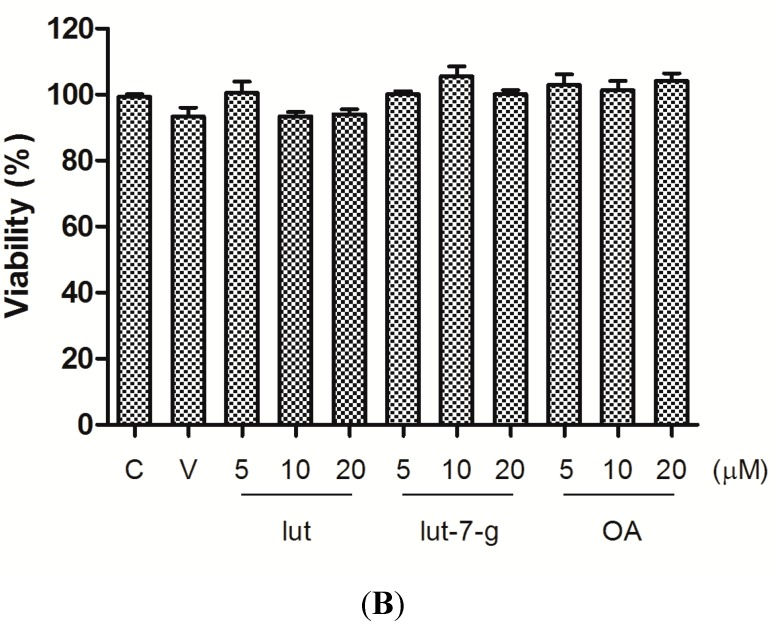 "Effect of GTE, lut, lut-7-g, and OA on cell viability. <t>MTT</t> assay was performed to assess the cytotoxicity of GTE, lut, lut-7-g, and OA on HUVECs. HUVECs were treated with medium only (Control, denotes as ""C""), vehicle only <t>(DMSO,</t> 0.25% for GTE group and 0.1% for pure compounds group; denotes as ""V""), GTE (40, 80, 120, 160 μg/mL), lut (5, 10, 20 μM), lut-7-g (5, 10, 20 μM), and OA (5, 10, 20 μM) for 24 h. The cell viability was not affected after incubation for 24 h with, ( A ) GTE at concentrations up to 160 μg/mL; and ( B ) lut, lut-7-g, and OA at concentrations up to 20 μM."