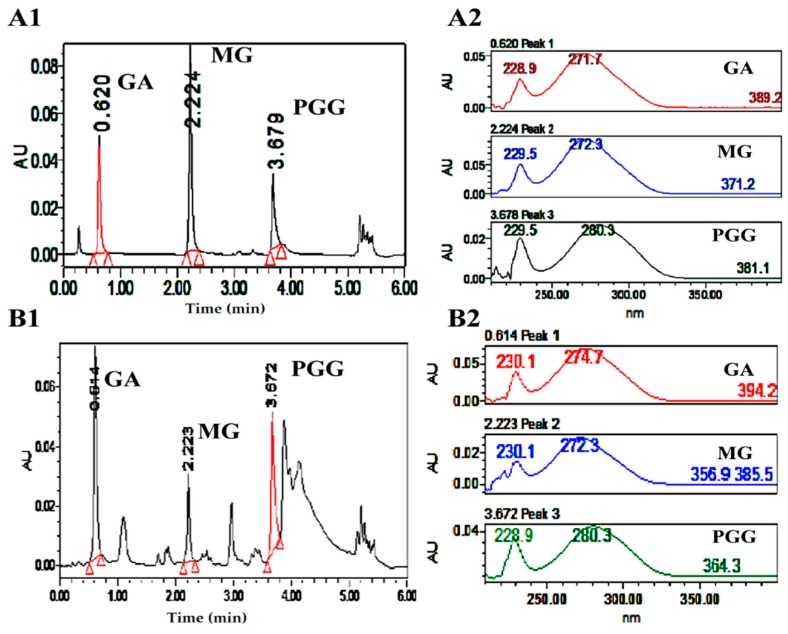 <t>UPLC</t> chromatograms, and UV spectra of GA, MG, and <t>PGG</t> as the reference standards ( A1 and A2 ) and as principles in MSKE ( B1 and B2 ).