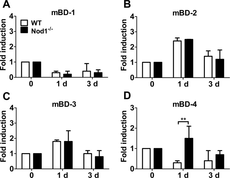 Expression of β-defensins in the lungs of WT and Nod1-dificient mice in fected with A. baumannii . <t>RNA</t> was obtained from the lungs of WT and Nod1-deficient mice (n=5–6 mice per group) infected with A. baumannii . The gene expressions of mBD-1, -2, -3, and -4 were examined by real-time <t>PCR</t> (A–D). Fold increase (arbitrary unit) was obtained by comparing each level in the lungs from infected to that in uninfected control lungs. * P