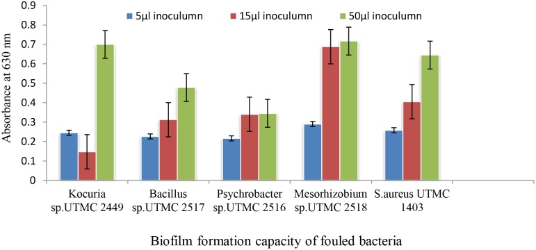 The biofilm formation of dominant isolated fouling bacteria from immersed artificial platforms in Oman sea detected by crystal violet assay.