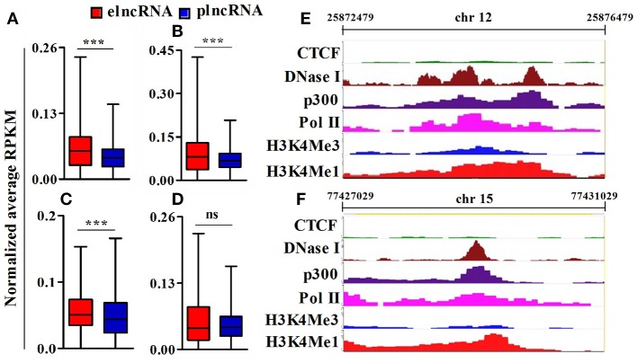 Analysis of epigenomic signatures around transcription start site (TSS) of elncRNAs and plncRNAs. (A–D) Average normalized RPKM (reads per kilobase million) values of <t>RNA</t> polII, p300, <t>DNaseI</t> hypersensitivity site, and CCCTC binding factor (CTCF) in elncRNAs and plncRNAs, respectively; (E,F) Contrast chromatin (H3K4Me1 and H3K4Me3) and epigenetic (RNA polII, p300, DNaseI hypersensitivity and CTCF binding site) landscapes (in mouse lungs) around TSS of NONMMUT013718 and NONMMUT024103 elncRNAs, respectively. *** P ≤ 0.001 and ns = non-significant.
