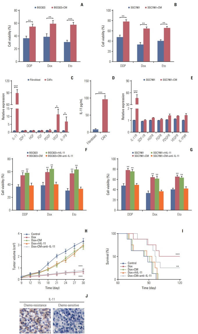 Cancer-associated-fibroblasts (CAFs) regulated chemo-resistance through secreting interleukin 11 (IL-11). The effect of CAFs on the sensitivity of gastric cancer cells to chemotherapy drugs was examined by using MTT assay. (A) The cell viability of BGC823 cells treated with 10 μg/mL DDP, 200 μM etoposide, and 20 μM doxorubicin, respectively with or without CAFs medium (CM) pretreated. Dox, doxorubicin; Eto, etoposide. (B) The cell viability of SGC7901 cells treated with 8 μg/mL DDP, 200 μM etoposide, and 20 μM doxorubicin. respectively with or without CM pretreated. (C) The mRNA expression of IL-11, SDF-1, HGF, FGF, PDGF, VEGF, and IL-1F9 in normal fibroblast and CAFs. (D) The expression of IL-11R in normal fibroblast and CAFs was detected by using enzyme-linked immunosorbent assay. (E) The mRNA expression of IL-11R, VEGFR, PDGFR, HGFR, CXCR4, SDF-1R, and IL-1F9R in SGC7901 cells with or without CAFs co-cultured. (F) The cell viability of BGC823 cells treated with 10 μg/mL DDP, 200 μM etoposide, and 20 μM doxorubicin, respectively with or without CAFs or rhIL-11 (10 ng/mL) pre-co-cultured in the presence or absence of IL-11 neutralizing antibody (25 μg/mL). (G) The cell viability of SGC7901 cells treated with 8 μg/mL DDP, 200 μM etoposide, and 200 μM doxorubicin, respectively with or without CAFs or rhIL-11 (10 ng/mL) pre-co-cultured in the presence or absence of IL-11 neutralizing antibody (25 μg/mL). (H) The tumor volume of NOD-SCID mice bearing SGC7901 cells co-injected with CAFs-CM (50 μL 10× CM) or IL-11 (2.5 μg/kg) treated by doxorubicin in the presence or absence of IL-11 neutralizing antibody (0.05 mg/kg). (I) The survival curve of NOD-SCID mice bearing SGC7901 cells co-injected with CAFsCM (50 μL 10× CM) or IL-11 treated by doxorubicin in the presence or absence of IL-11 neutralizing antibody (0.05 mg/kg). (J) Expression of IL-11 in gastric cancer tissues from chemo-sensitive and chemo-resistant patients. The data was presented as the mean±standard error of