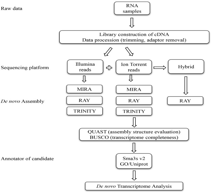 Experimental work flow showing the steps carried out and bioinformatic utilities used for a transcriptome analysis.