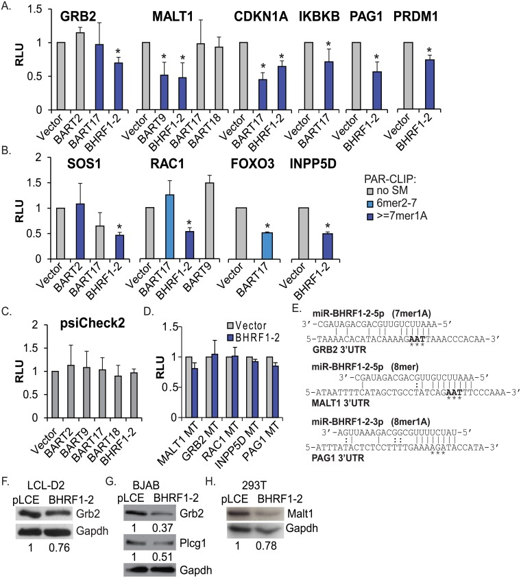 Validation of EBV miRNA targets. A-C. 293T cells were co-transfected with indicated 3'UTR luciferase reporters or psiCheck2 empty vector (C.) and EBV miRNA expression vectors (pLCE-based). 48–72 hrs post-transfection, cells were lysed and assayed for dual luciferase activity. PAR-CLIP interactions between EBV miRNAs and 3'UTRs are highlighted. SM = seed match. Reported are the averages of at least three independent experiments performed in triplicate. *By Student's t-test, p