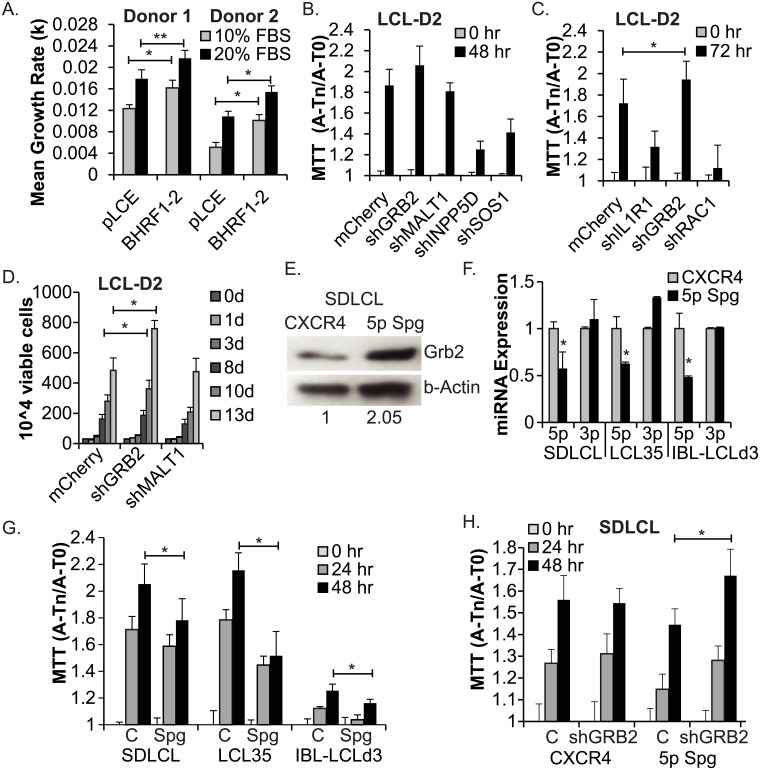 Regulation of GRB2 by EBV miR-BHRF1-2-5p contributes to the growth of latently infected LCLs. A. Ectopic expression of the BHRF1-2 miRNAs enhances the growth of mutant LCLs. BHRF1-2 miRNA mutant LCLs stably transduced with pLCE or pLCE-BHRF1-2 (Donor 1 = LCLBACD2; Donor 2 = LCL-D2) were plated in triplicate or quadruplicate at 2.5 x 10^6 cells per mL in media containing 10% FBS or 20% FBS (see also S3 Fig ). Viable cell counts were determined at times indicated in S3 Fig . Cell growth rates were calculated between 2 and 5 days post-plating using the equation: ln(N1/N1) = k(t1-t2), where k = growth rate, t = time, and N = cell number. *By Student's t-test, p