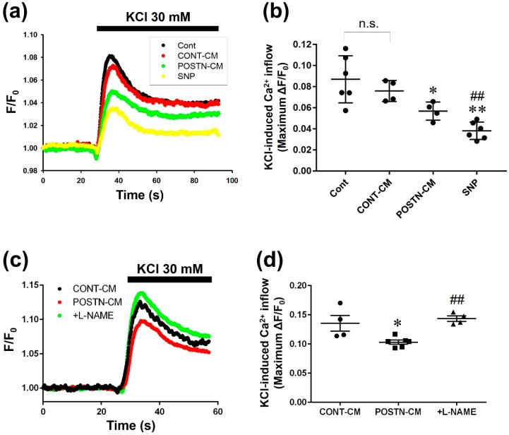 Culture media (CM) derived from POSTN-stimulated RVFbs inhibited Ca 2+ inflow through l -type Ca 2+ channel (LTCC) in H9c2 cardiomyoblasts. RVFbs were stimulated for 24 h with recombinant rat POSTN (1000 ng/mL) or solvent (CONT). Then, the RVFbs were incubated in new serum-free <t>Dulbecco</t> Modified <t>Eagle's</t> Medium containing l -arginine (1 mM) for 24 h in the presence or absence of pretreatment with l -NAME (600 μM, 10 min). CM derived from solvent-stimulated RVFbs (CONT-CM) and from POSTN-stimulated RVFbs in the presence (+ l -NAME) or absence (POSTN-CM) of l -NAME were collected. H9c2 cardiomyoblasts grown to confluent on a coverslip were treated with the CM. Ca 2+ inflow through LTCC was measured by a fluorescent calcium measuring system using Fura-2 AM, a fluorescent calcium indicator. F340/F380 ratio (F), was calculated and normalized by the basal fluorescence (F 0 ) at 30 seconds before KCl (30 mM)-stimulation (F/F 0 ). ( a ) Average time course of F/F 0 in H9c2 cardiomyoblasts treated for 1 h with milliQ (Cont), CONT-CM, POSTN-CM or sodium nitroprusside (SNP, 100 μM). The fluorescence was recorded every 0.1 s. ( b ) The maximum F/F 0 change (ΔF/F 0 ) by KCl-induced Ca 2+ inflow was shown as mean ± S.E.M. (Cont, SNP: n = 6; CONT-CM, POSTN-CM: n = 4). n.s.: not significant, *, ** p