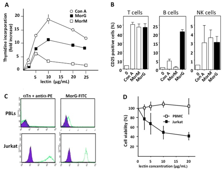 Morniga-G activates healthy human lymphocytes and induces cell death in leukemia cells. PBMCs from healthy donors were cultured for 3 days: ( A ) in the presence of increasing concentrations of Morniga-M (MorM), Morniga-G (MorG), and Con A and proliferative index (from the [ 3 H]-thymidine incorporation) was calculated; and ( B ) in the presence of lectins at concentrations triggering maximal proliferation. CD25 expression was evaluated using flow cytometry, in CD3+ T lymphocytes, in CD19+ CD3- B lymphocytes, and in CD56+ CD3- NK lymphocytes. Values are means ± SD of three experiments performed with three to four different healthy donors. ( C ) Resting PBMCs and Jurkat A3 leukemic cells were incubated with anti-Tn mouse monoclonal antibody + PE-conjugated anti-mouse antibody (αTn + antiα-PE) or FITC-conjugated Morniga G (MorG-FITC) and analyzed using cytofluorimetry. Healthy peripheral lymphocytes (PBLs) were analyzed in a gate corresponding to lymphocytes as defined by the size and granularity parameters. Autofluorescence: purple histograms, dashed green histogram: fluorescent positive cells. ( D ) PBMCs of healthy donors and Jurkat A3 leukemic cells were cultured for 24 h with different concentrations of MorG, then cell viability was evaluated in 3-(4,5-dimethylthiazol)-2-5-diphenyl terazolium bromide MTT reduction assays (mean values ± SD of four independent experiments).