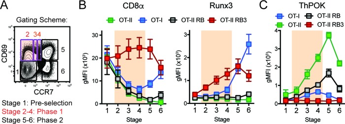 Acceleration of CD8-lineage commitment in HDAC3-deficient thymocytes. ( A ) Gating scheme outlining two phases of CD4/CD8-lineage commitment—Phase one includes CD69 + CCR7 - cells (Stage 2), CD69 + CCR7 lo cells (Stage 3), and CD69 + CCR7 int cells (Stage 4); Phase two identifies CD69 + CCR7 + cells (Stage 5) and CD69 - CCR7 + cells (Stage 6). Orange shading highlights Phase 1. ( B ) Expression of Runx3 and CD8α during stages of lineage commitment (Stages 1–6), as outlined in ( A ) from OT-I, OT-II, OT-II RB and OT-II RB3 mice. CD69-versus-CCR7 plots were gated from DN-removed, CD45.2 + cells. ( C ) Expression of ThPOK during stages of lineage commitment, gated as in ( B ). Plots in B and C show mean ±SEM of MFI from 5 to 7 mice per group from five independent experiments.