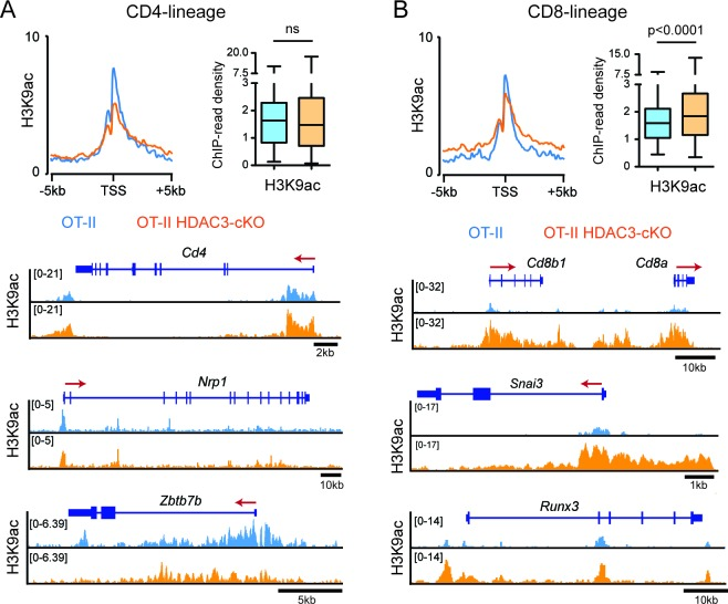 H3K9ac signal at CD4-lineage and CD8-lineage genes. ( A–B ) Average H3K9ac ChIP-seq signal at the transcription start site (TSS) between OT-II and OT-II HDAC3-cKO Selecting cells for CD4-lineage gene sets ( A ) and CD8-lineage gene sets ( B ). Box-and-whisker plots depict H3K9ac signal at the TSS at each CD4- or CD8-lineage gene between OT-II and OT-II HDAC3-cKO mice. Snapshots of example ChIP-seq tracks for each gene set are below plots depicting the average signal. P values were calculated using Wilcoxon signed rank test.