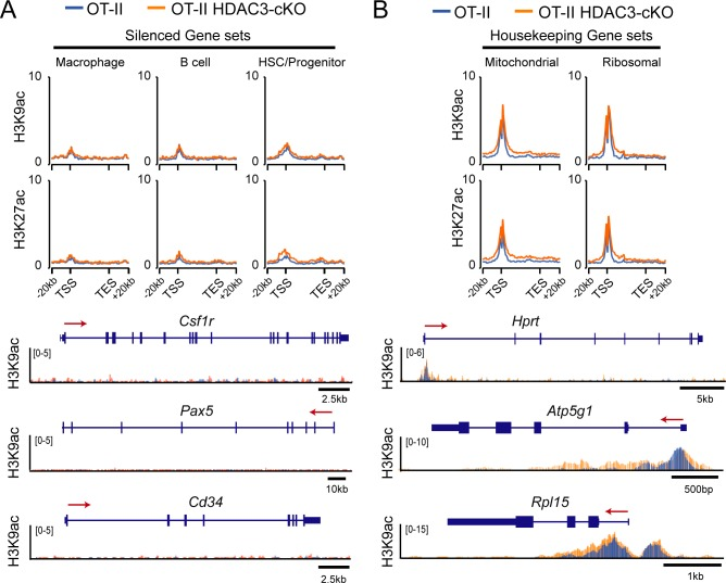 H3K9ac signal and H3K27ac signal at silenced genes and housekeeping genes in thymocytes. ( A–B ) Average H3K9ac and H3K27ac signal ±20 kb around the gene body among gene sets that are silenced in thymocytes ( A ) or housekeeping genes ( B ). Below are example H3K9ac ChIP-seq snapshots of genes within each of the genesets— Csf1r for macrophage, Pax5 for B cell, Cd34 for HSC/progenitor, Hprt for housekeeping, Atp5g1 for mitochondrial, and Rpl15 for ribosomal. Each image depicts an overlay of ChIP-seq tracks between OT-II (blue) and OT-II <t>HDAC3-cKO</t> (orange) mice. Refer to Figure 3—source data 2 for list of genes in these gene sets (macrophage, B cell, HSC/Progenitor, mitochondrial, ribosomal). TSS represents transcription start site; TES represents transcription end site. Scale bar in kb below ChIP-seq tracks identifies scale of snapshot.