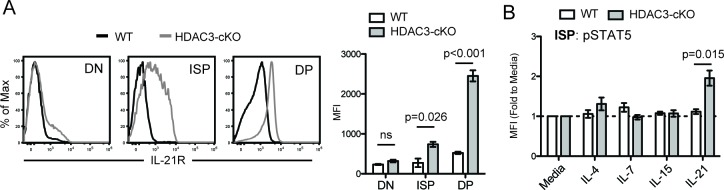 IL-21R expression and signaling in CD2-icre HDAC3-cKO mice. ( A ) IL-21R expression in DN (CD4 - CD8 - ), immature SP (ISP; CD4 - CD8 + TCRβ - ), and DP (CD4 + CD8 + ) thymocytes from WT and HDAC3-cKO mice. Bar graph is mean ±SEM of MFI. N = 3 mice/group. ( B ) p-STAT5 expression in ISPs from WT and CD2-icre HDAC3-cKO mice that were stimulated with the indicated cytokines for 10mins. Experimental conditions are the same as performed in Figure 5E . Bar graph shows mean ±SEM of p-STAT5 MFI fold to unstimulated conditions. N = 4–5 mice/group.