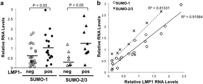 Increased sumo-1/2/3 levels were detected in LMP1-positive lymphoma tissues in an LMP1-dependent manner. ( a , b ) RNA was extracted from 42 biopsy tissues and cDNA was made. Real-time PCR was performed to quantitate gapdh , LMP1, and sumo-1 levels. RNA yields allowed sumo-2/3 levels to be tested in 17 of the 42 samples. ( a ) Relative LMP1, sumo-1 and sumo-2/3 levels (relative to gapdh ) were determined. The detection of LMP1 RNA levels determined is tissues were LMP1-negative (LMP1-neg) and LMP1-positive (LMP1-pos). Results are shown as the mean relative sumo-1 and sumo-2/3 levels for individual samples (shapes). Horizontal lines represent man sumo-1 and sumo-2/2 levels for the collective LMP1-neg and LMP1-pos samples. ( b ) Of the 19 LMP1-positive tissue samples, relative sumo- 1 levels were determined in all 19 samples but relative sumo-2/ 3 levels were determined in only 9 samples. Results are shown as the mean relative LMP1, sumo- 1, and sumo-2/ 3 leves of samples run in duplicate. Regression analysis was performed.